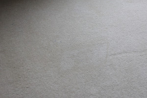Spot Cleaning Guide Absolute Carpet Care Carpet